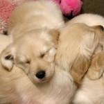dog pile effect という現象についてRailsで解消するにはrace_condition_ttlを利用する